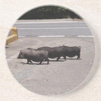Cerdos negros salvajes posavasos cerveza