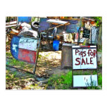 Cerdos para la venta en Dale, TX Tarjeta Postal