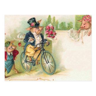 Cerdos románticos postal
