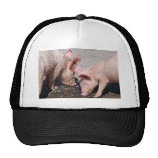 Cerdos rosados lindos gorra