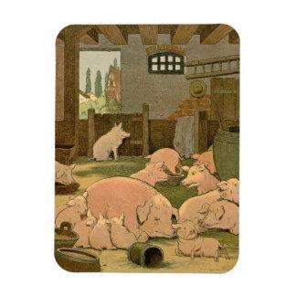 Cerdos y cochinillos en la granja imanes rectangulares