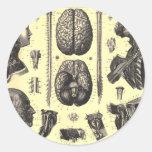 Cerebro anatómico y más pegatinas