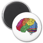 Cerebro del arco iris iman