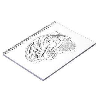 Cerebro del vintage libros de apuntes con espiral