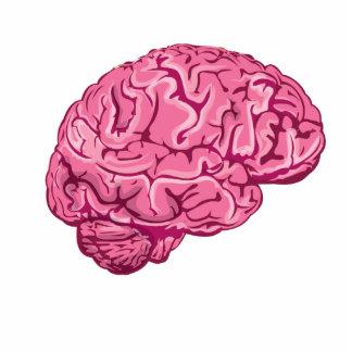 Cerebro del zombi esculturas fotográficas