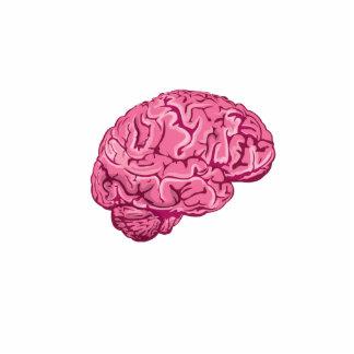 Cerebro del zombi esculturas fotograficas