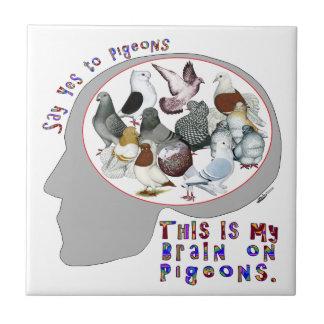 Cerebro en palomas teja cerámica