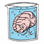cerebro en un tarro esculturas fotográficas
