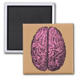 Cerebro humano de la anatomía imán cuadrado