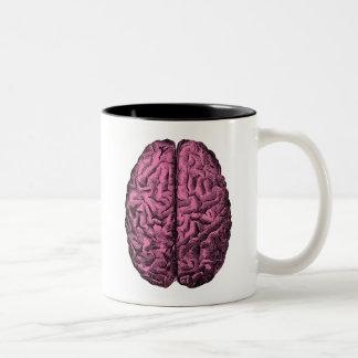 Cerebro humano de la anatomía taza dos tonos