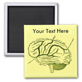 Cerebro humano imanes de nevera
