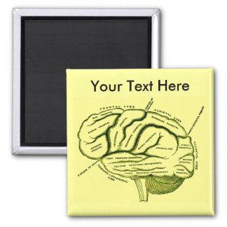 Cerebro humano imán cuadrado