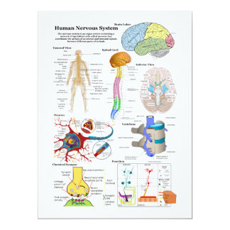 Cerebro humano y diagrama de sistema nervioso invitaciones personales