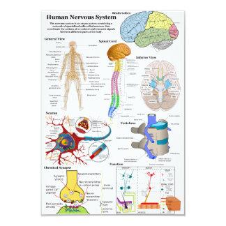 Cerebro humano y diagrama de sistema nervioso invitacion personal