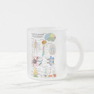 Cerebro humano y diagrama de sistema nervioso taza de cristal