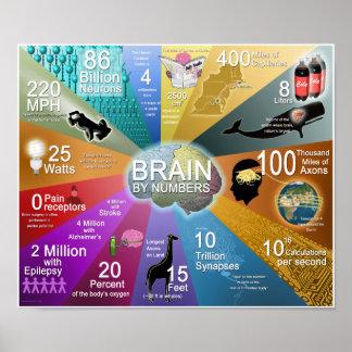 Cerebro por números póster