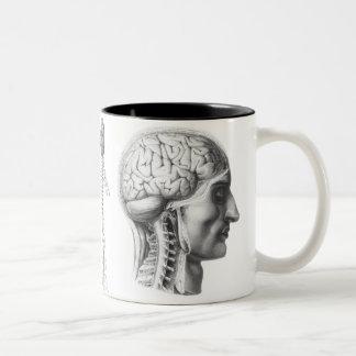 cerebro revelador taza de café
