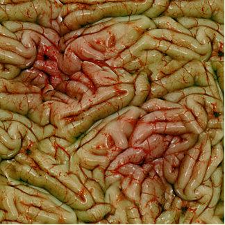 Cerebros BrainZZ BRAINZZZ Esculturas Fotograficas