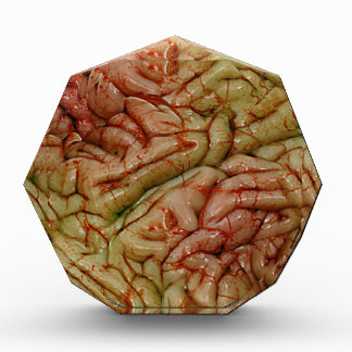 Cerebros BrainZZ BRAINZZZ