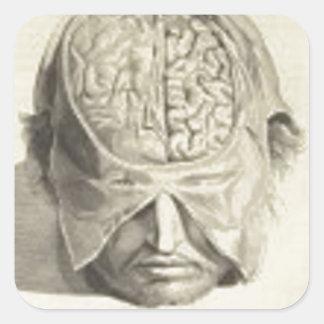 Cerebros Pegatina Cuadrada