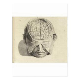 Cerebros Tarjetas Postales