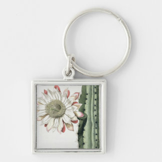 Cereus Erectus Altissimus Syrinamensis from 'Phyth Key Chains
