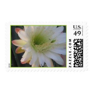 cereus flower postage stamp