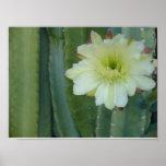 Cereus Fringe Print