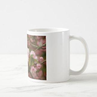 Cereza floreciente de Kwanzan del japonés de la Taza Clásica