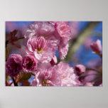 Cereza floreciente japonesa impresiones