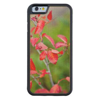 Cereza occidental de la obstrucción (Prunus Funda De iPhone 6 Bumper Arce