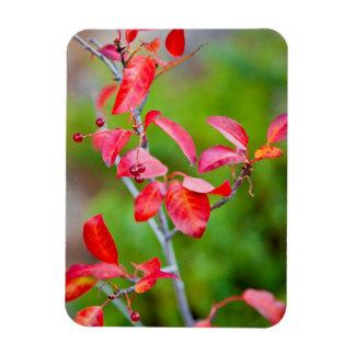 Cereza occidental de la obstrucción (Prunus Iman Rectangular