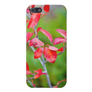 Cereza occidental de la obstrucción (Prunus iPhone 5 Funda