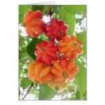 Cerezas de Suriname Tarjeton