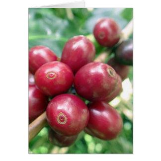 Cerezas hawaianas salvajes del café tarjeta