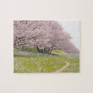 Cerezos florecientes de Yoshino en un campo de Rompecabezas