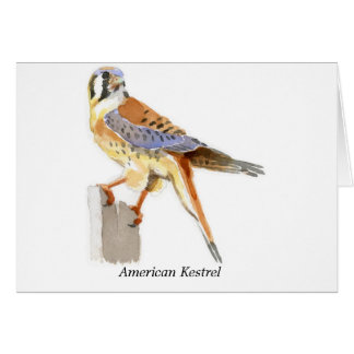 Cernícalo americano tarjeta pequeña