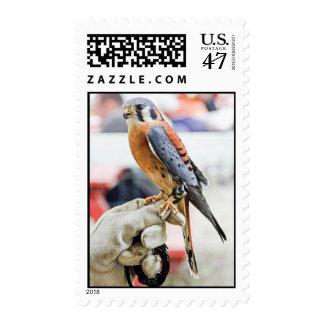 Cernícalo americano timbre postal