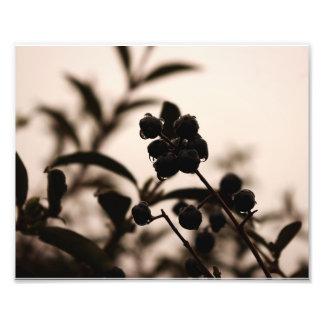 cerque las bayas en la foto de color monocromática fotografías