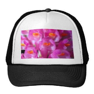 cerrado para arriba de la flor de la orquídea gorra