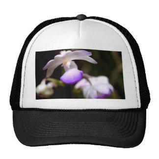 cerrado para arriba de la flor de la orquídea gorro