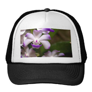 cerrado para arriba de la flor de la orquídea gorros