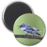 Cerulean Warbler 2 Inch Round Magnet