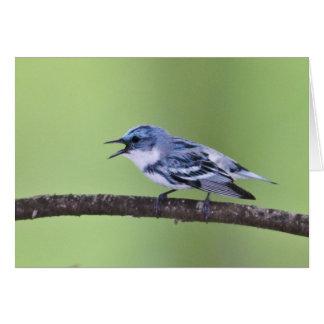 Cerulean Warbler Greeting Cards