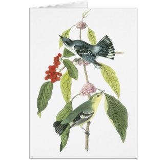 Cerulean Warbler, John Audubon Greeting Card