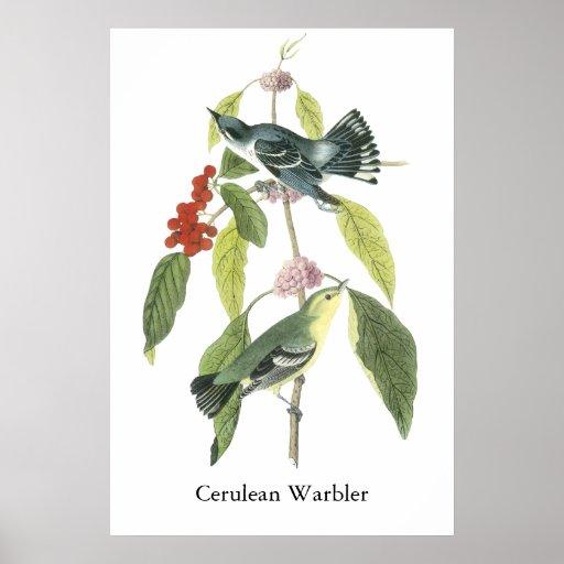 Cerulean Warbler, John Audubon Poster