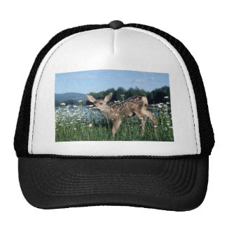 Cervatillo Ciervo-joven de la mula en campo verde Gorro