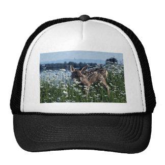 Cervatillo Ciervo-joven de la mula en campo verde Gorros Bordados