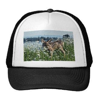 Cervatillo Ciervo-joven de la mula en campo verde  Gorra