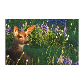 cervatillo de los ciervos de la Negro-cola, Impresiones En Lona Estiradas